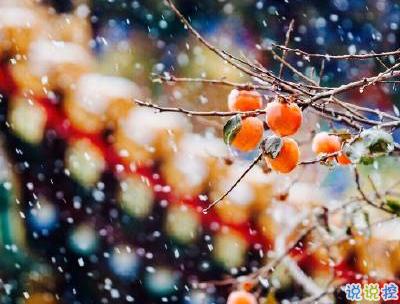 冬天下雪天文案唯美带图片 抖音最火下雪天说说5
