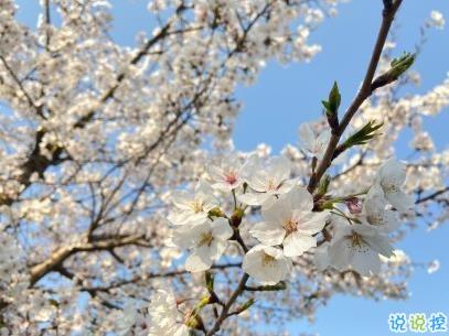 春天桃花盛开的说说带图片 赏花晒花的朋友圈文案2