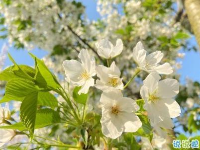 春天桃花盛开的说说带图片 赏花晒花的朋友圈文案4
