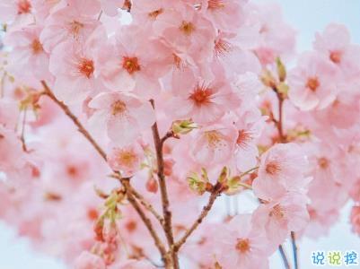 春天桃花盛开的说说带图片 赏花晒花的朋友圈文案5