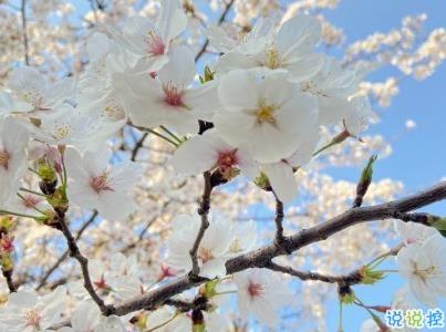 春天桃花盛开的说说带图片 赏花晒花的朋友圈文案6