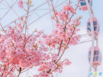 春天桃花盛开的说说带图片 赏花晒花的朋友圈文案7