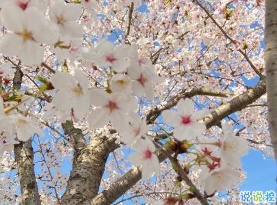 春天桃花盛开的说说带图片 赏花晒花的朋友圈文案8