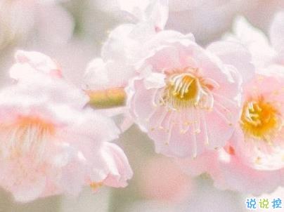 春天桃花盛开的说说带图片 赏花晒花的朋友圈文案9