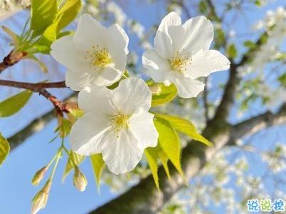 春天桃花盛开的说说带图片 赏花晒花的朋友圈文案10