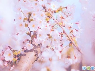 春天桃花盛开的说说带图片 赏花晒花的朋友圈文案12