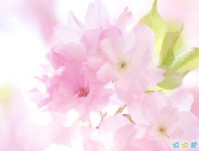 春天桃花盛开的说说带图片 赏花晒花的朋友圈文案15
