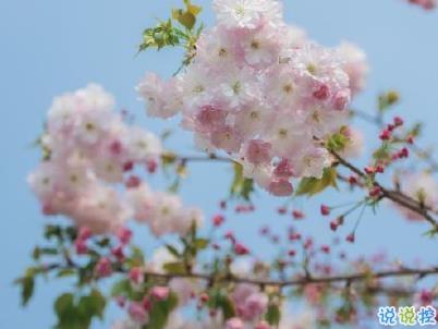 春天桃花盛开的说说带图片 赏花晒花的朋友圈文案13