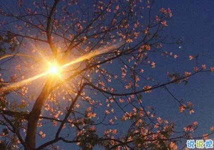 气质唯美适合各种心情的句子 一个人散步是和地球单独的约会2